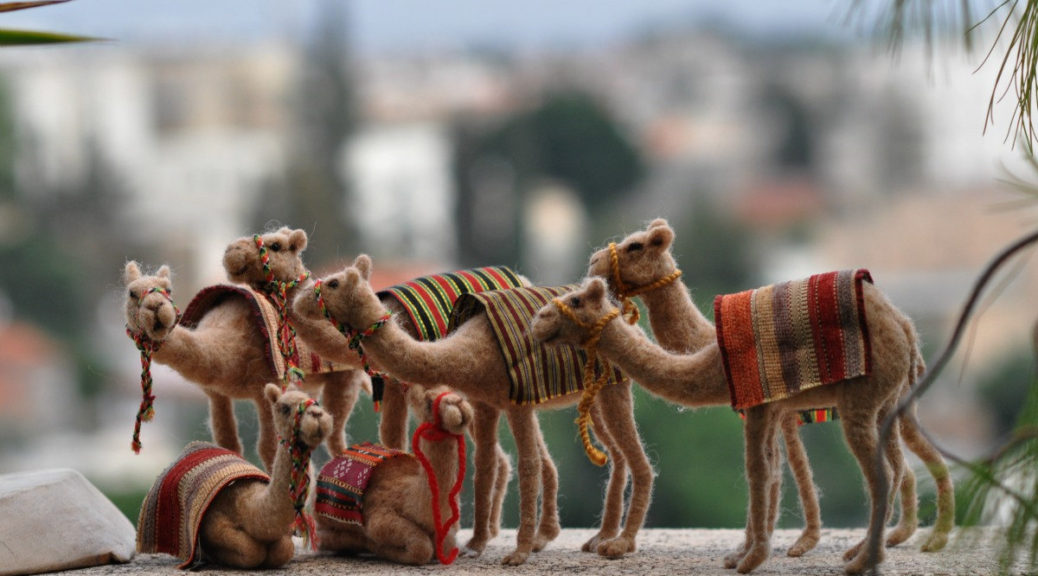 camels for three kings