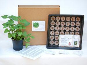 Indoor herbs for the avid cook | Image courtesy Etsy seller GrowandMake