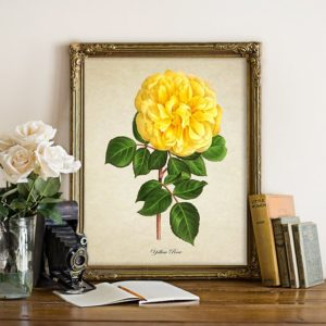 A flower print or photo.