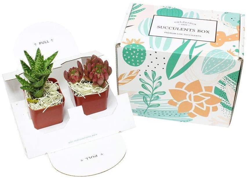 gift for virgo succulent subscription box